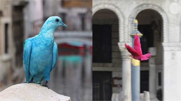 Colourful Pigeons at Venice Biennale 2012