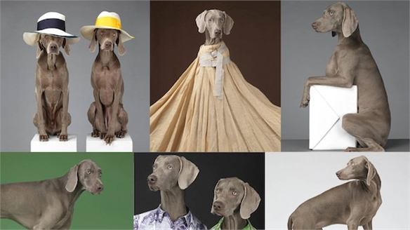 Acne x William Wegman Dogs Campaign