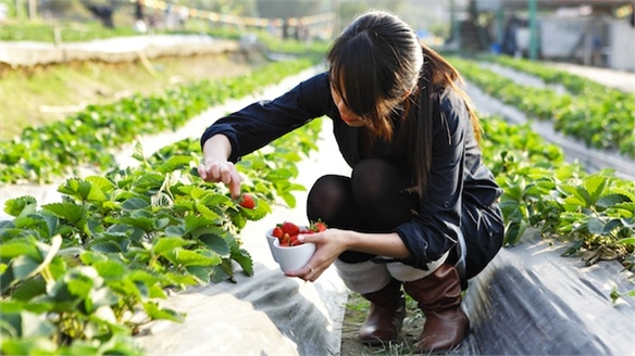 China's Farm-to-Table Movement