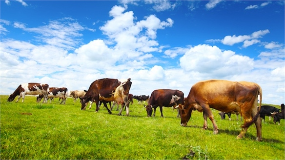 'Crowdfunded Cows' Offer Sustainable Beef