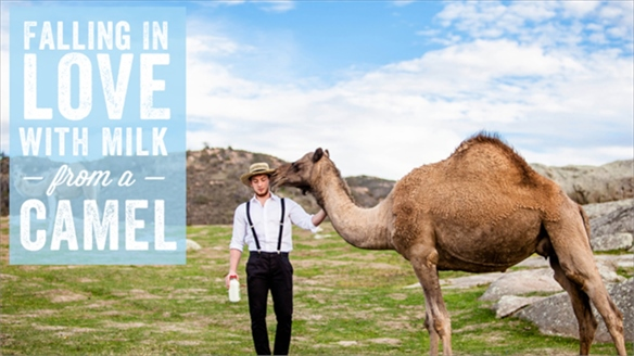 Emerging Superfood: Camel Milk
