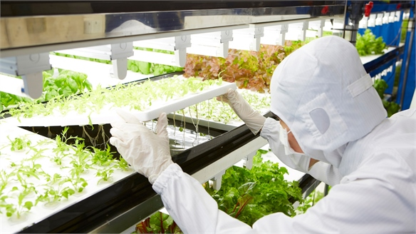 Toshiba's High-Tech Farm