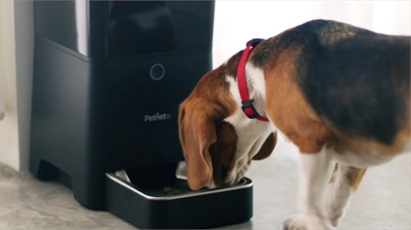 Puppy Love: Pet Tech for Valentine's