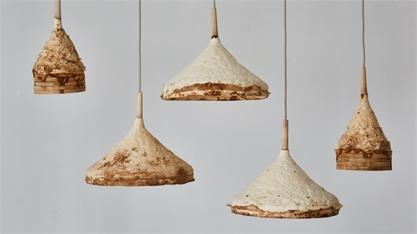 Mushroom Mycelium & Timber Used to Grow Furniture