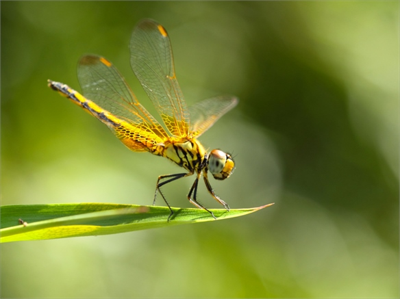Sensor-Equipped Dragonflies