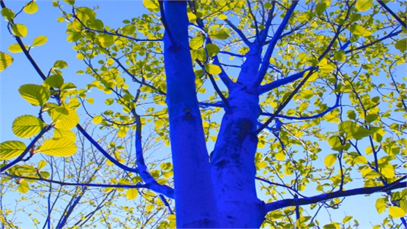 The Blue Trees Project