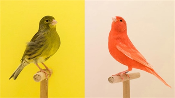 Luke Stephenson: Incomplete Dictionary of Show Birds
