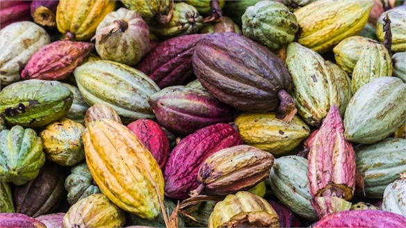 Mars Boosts Cocoa Farming