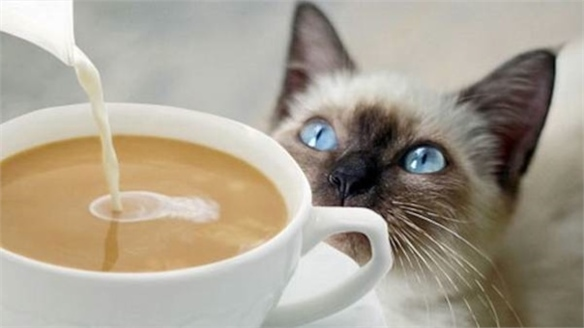 London's First Cat Café