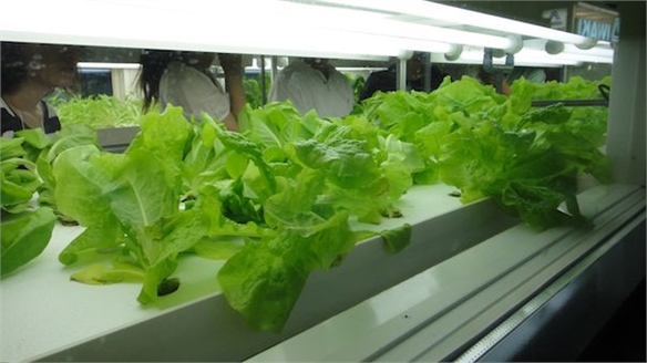 Agri-Cube: Hydroponic Growing System