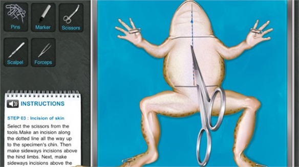 Digital Frog Dissection