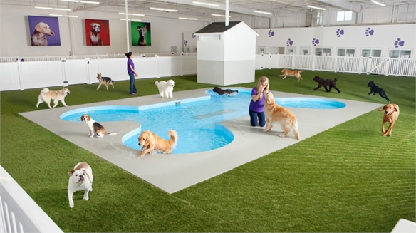 JFK's Terminal for Pets