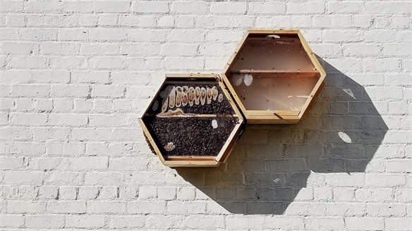 Beecosystem: Beehives for Beginners