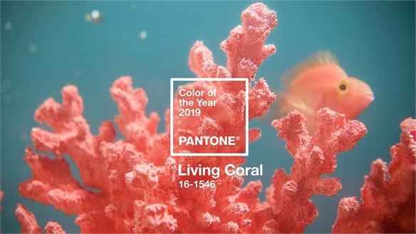 Pantone Crowns Living Coral Colour of the Year 2019