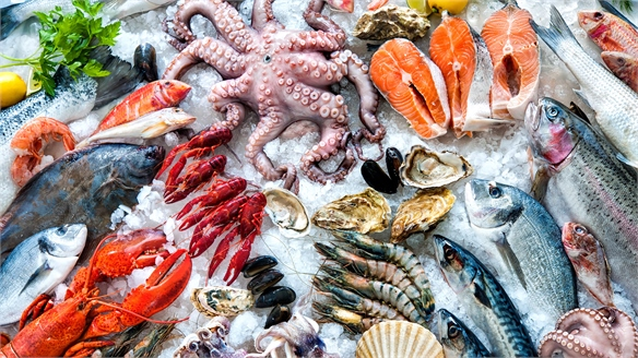 Ways to Recycle Seafood Waste Water